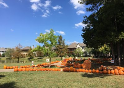 Shreveport Pumpkin Patch Provenance