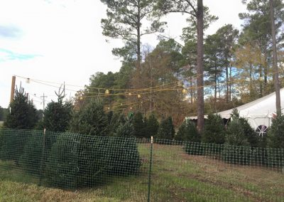 Raven's Cliff Christmas Tree Frasier Fir NC