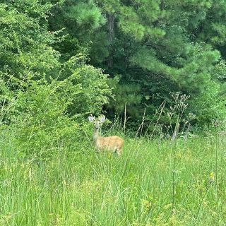 This customer has their eye on one of our gorgeous home lots! 👀 🦌 #provenancecommunity #lovewhereyoulive #deersighting
