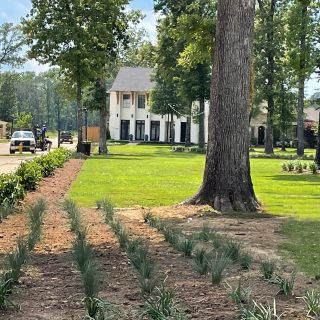 Greenleaf Park has some new plantings 🌱🌱🌱thanks to Lagniappe Lawnscapes! We are excited to see the planned park improvements taking shape. The crepe myrtle forest in Hollybrook Park is also looking lush. What's your favorite park in Provenance? We have Windrush Park, Greenleaf Park, Buckhorn Park, Savannah Green, Magnolia Park, Hollybrook Park, Sweetleaf Park, Bungalow Green, and numerous other preserved green spaces tucked away!   📍View them all on our map (tap link in bio): https://yourprovenance.com/real-estate/available-homesites/   #ProvenanceShreveport #shreveportla #shreveportrealestate #shreveporthomesforsale #shreveporthomes #newhomesforsale #newhomeconstruction #lovewhereyoulive #shreveportrealtor #parklife #traditionalneighborhooddevelopment